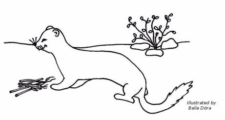 hermelinvadaszat 1kep